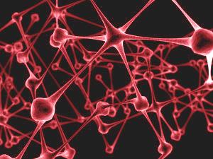 1043922_network_neurons_1.jpg