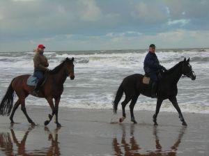 683173_horses_at_sea.jpg