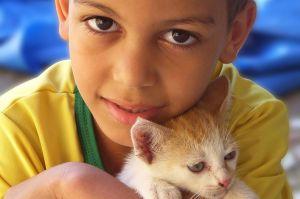 915517_kittens_2.jpg