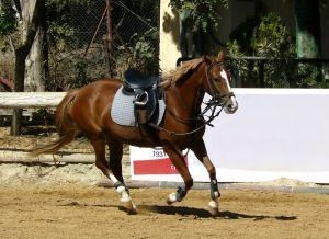 959389_running_horse.jpg