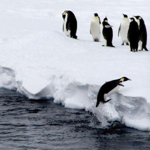 962333_penguin_jump.jpg